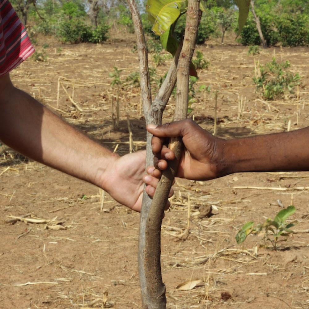 Agroforesterie au Bénin