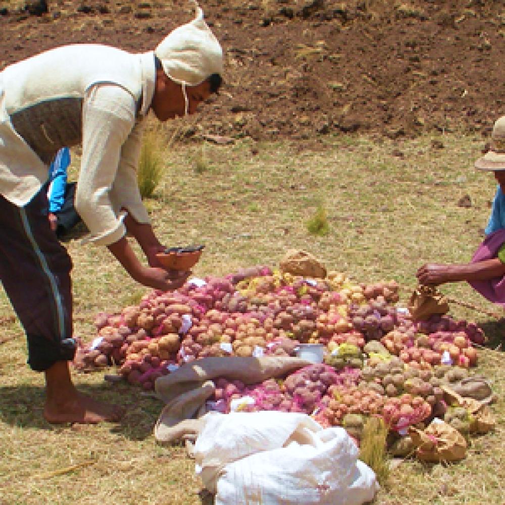 Former des paysans bio au Pérou