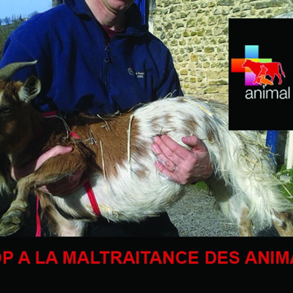Association Animal Cross