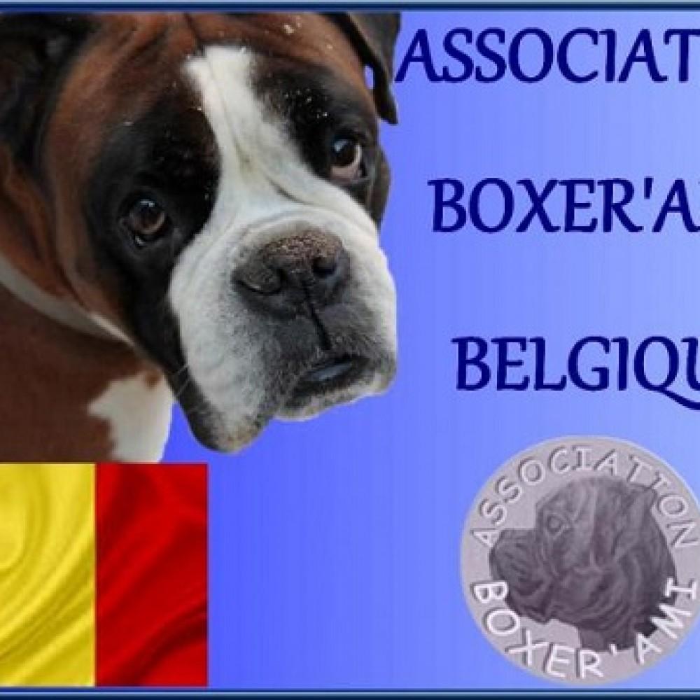 Boxer'Ami Belgique