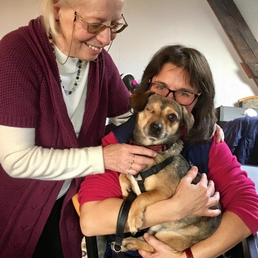 ROLDA's Pet Therapy For The Elderly Project