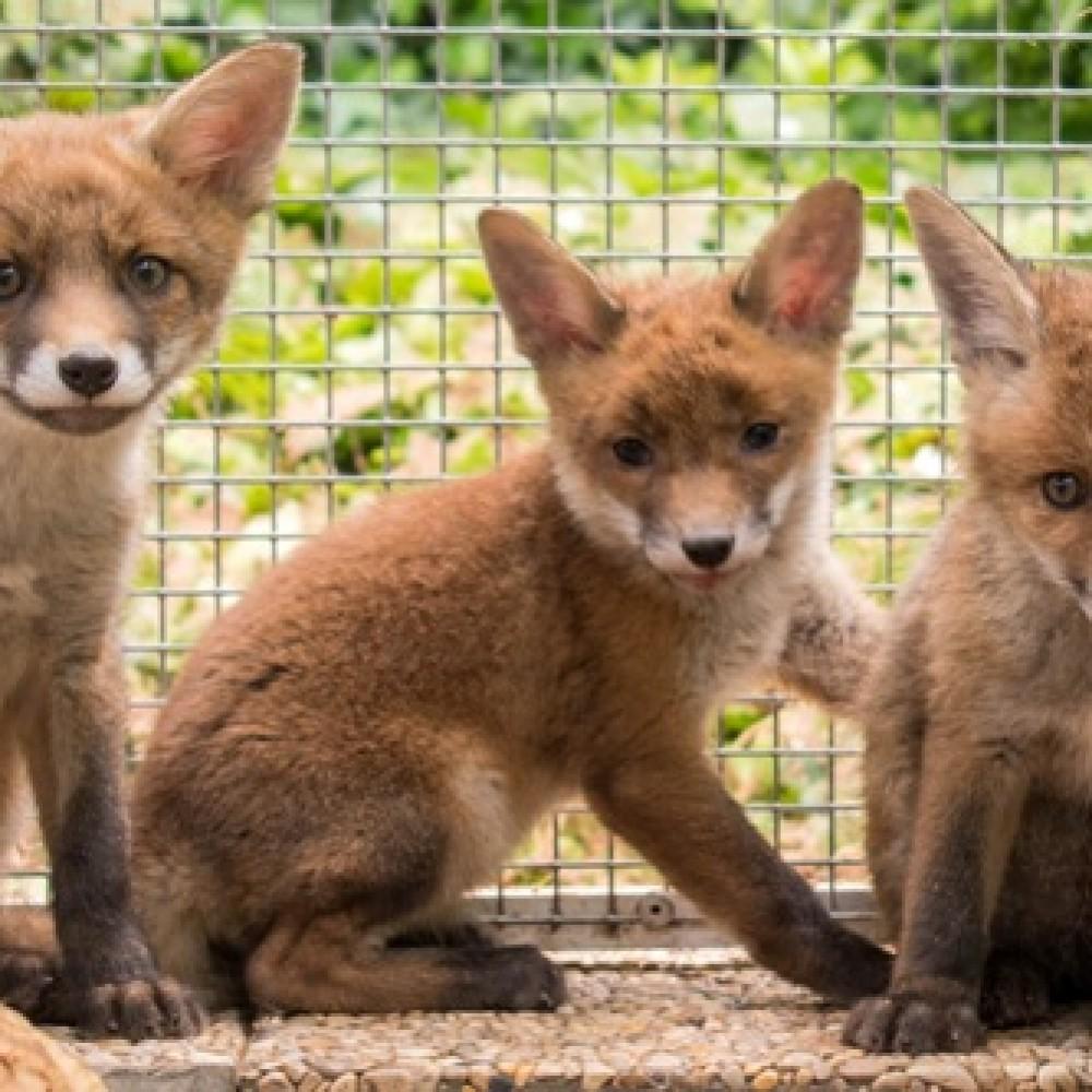Faune Alfort, Sauvetage des jeunes animaux sauvages