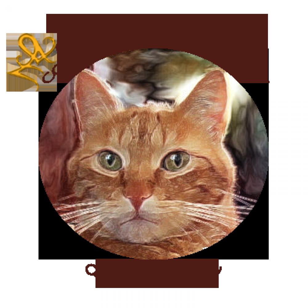 L'école du chat libre de Saintes