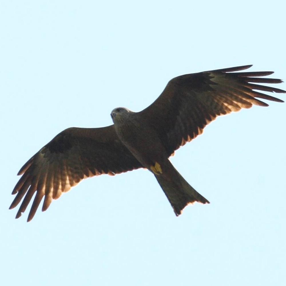 oiseaux cols libres