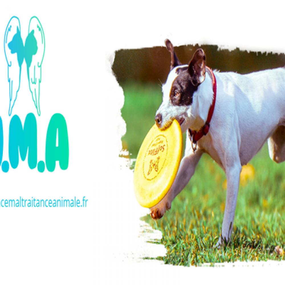 Urgence Maltraitance Animale