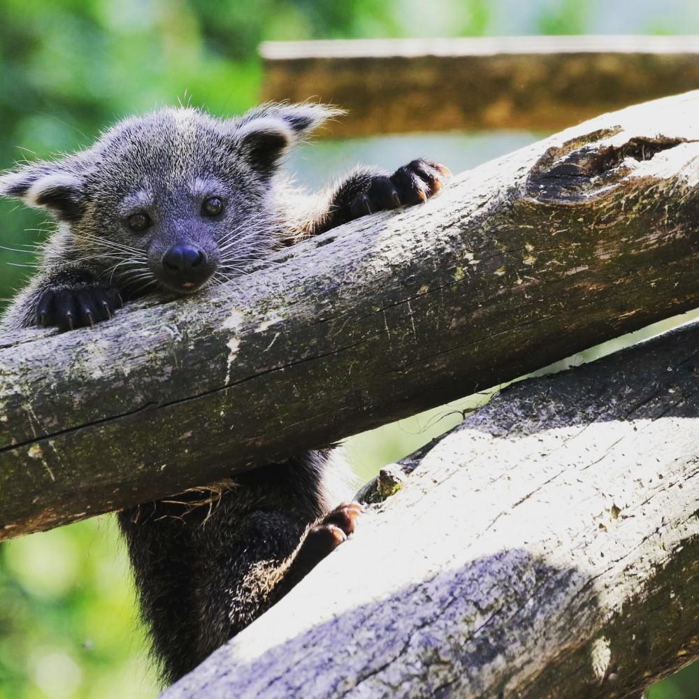 Bearcat Study Program