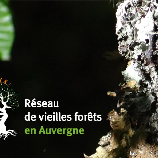 SYLVAE, réseau de vieilles forêts en Auvergne