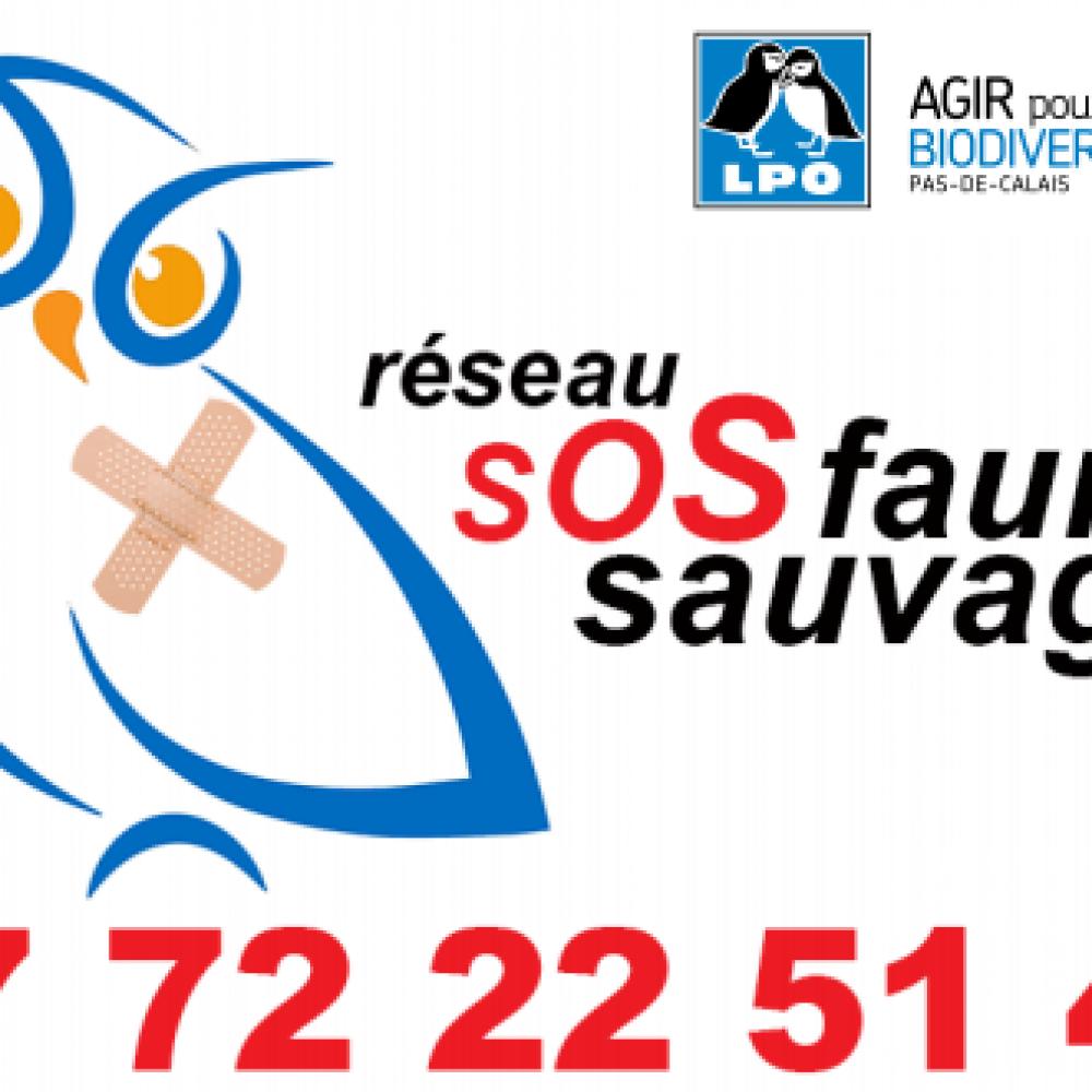 LPO 62 - SOS Faune Sauvage en détresse