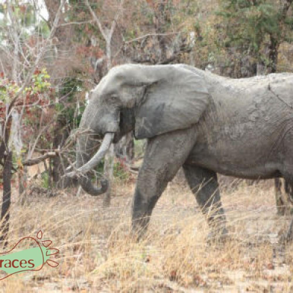 Un avenir pour la grande faune d'Afrique de l'ouest