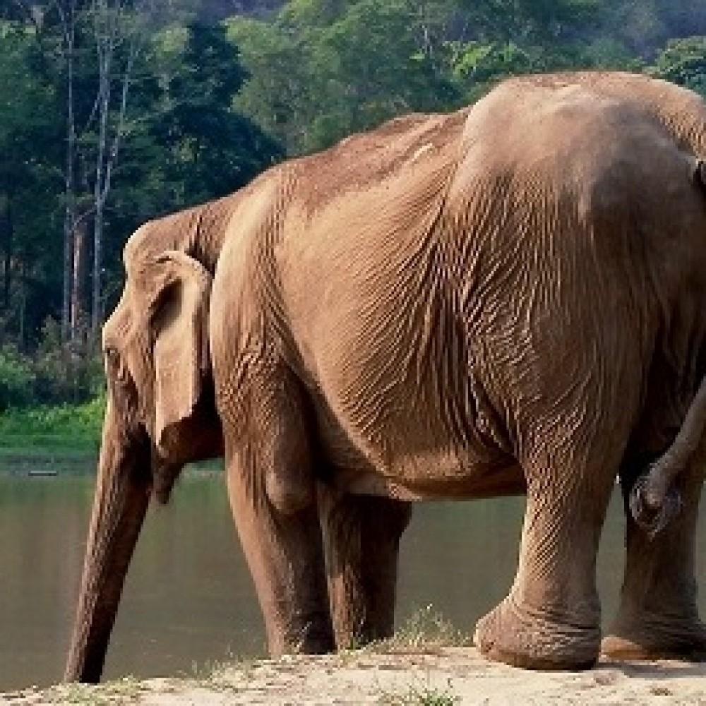Elephant Haven Europe