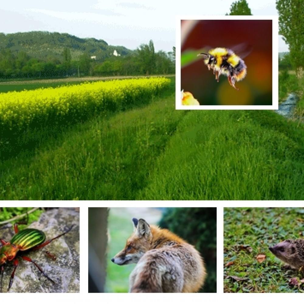 Agriculture-Biodiversité