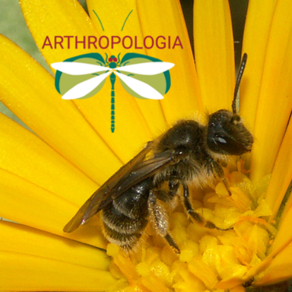 ARTHROPOLOGIA