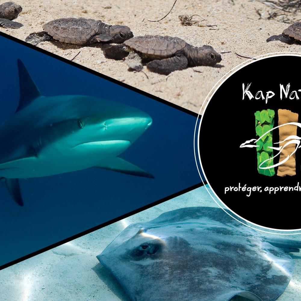 Kap Natirel, association Guadeloupéenne