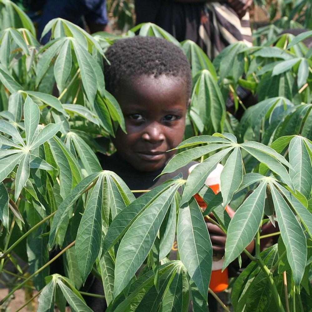 Projet Bene, Congo