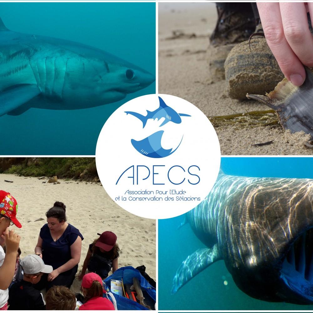 APECS, Association Pour l'Étude et la Conservation des Sélaciens