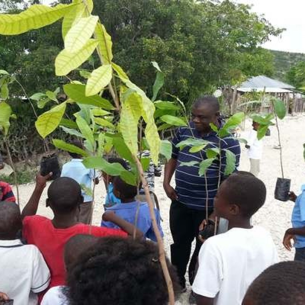 Parrain'arbre Haïti