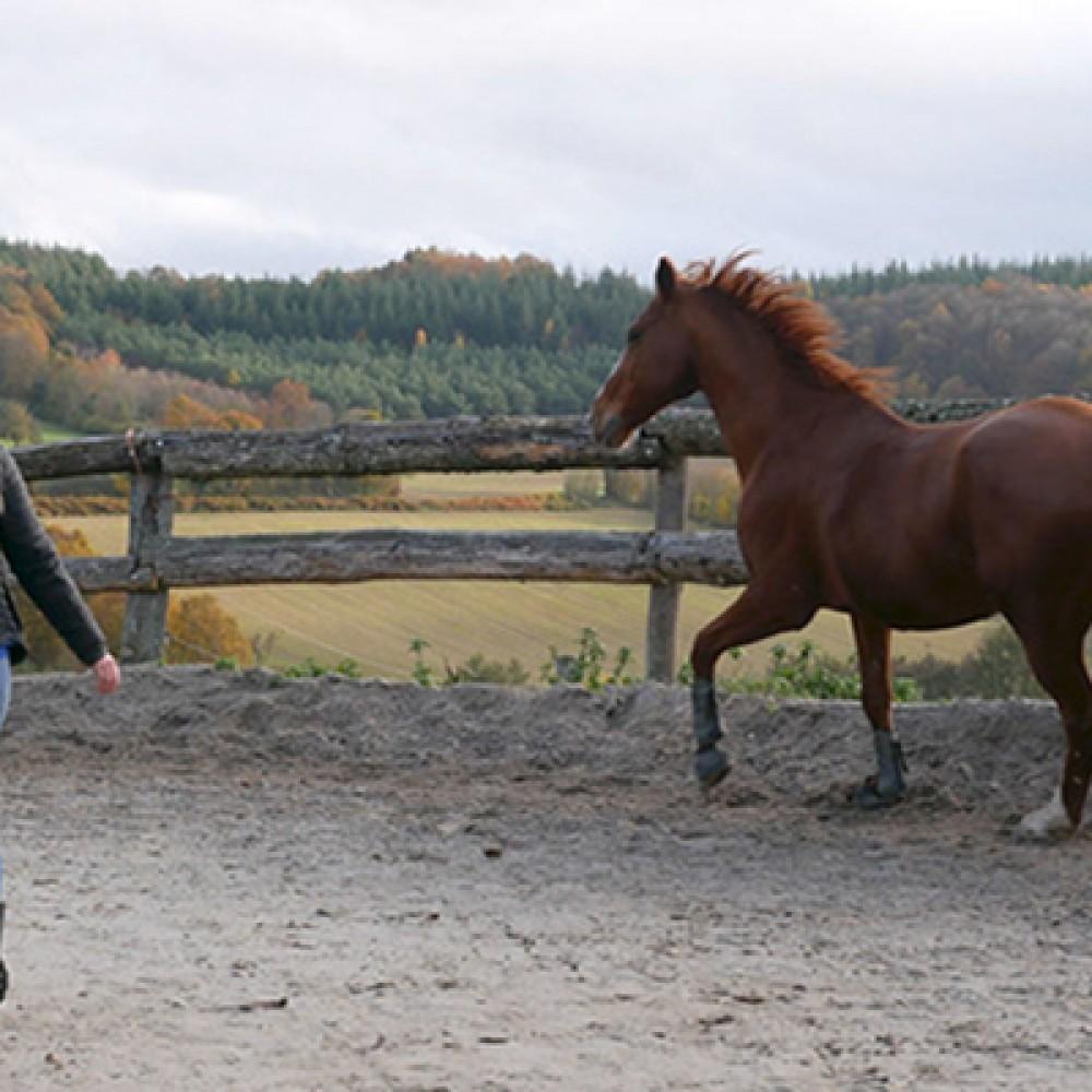 Équit'harmonie, médiation par le cheval