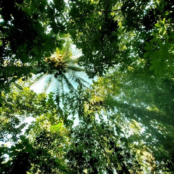 Arutam Zéro Déforestation