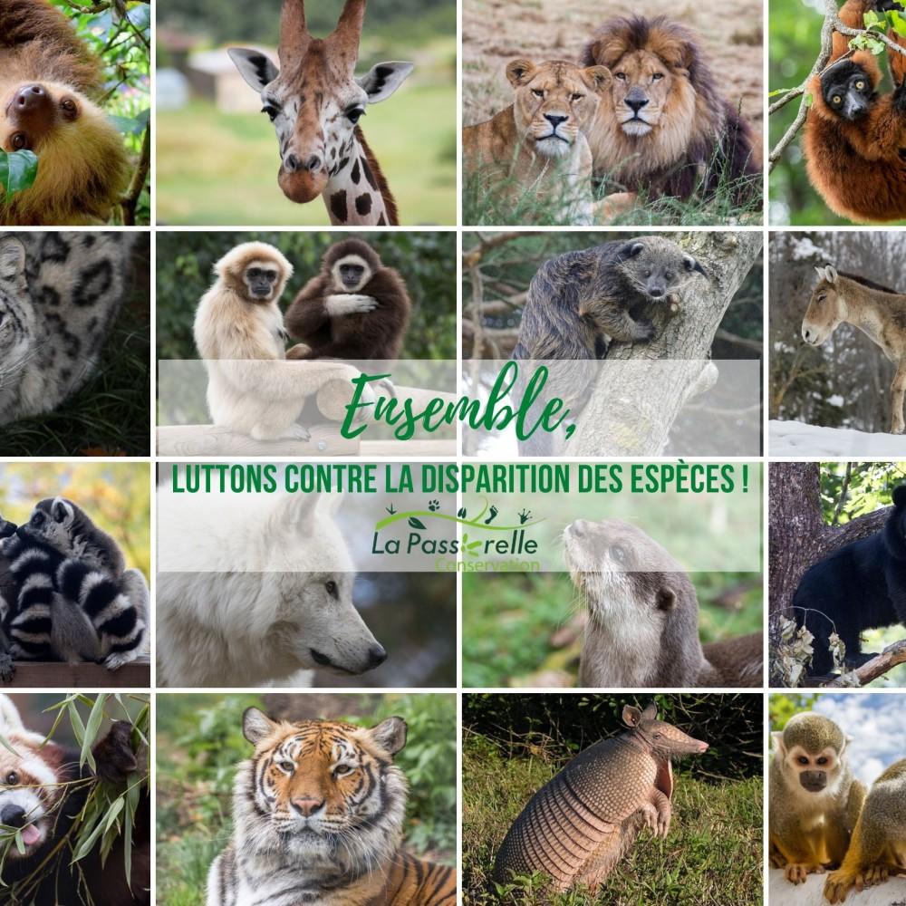 La Passerelle Conservation : Agir pour la conservation des espèces menacées