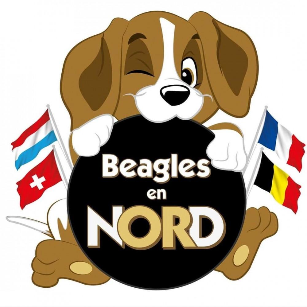 Asso Beagles en Nord