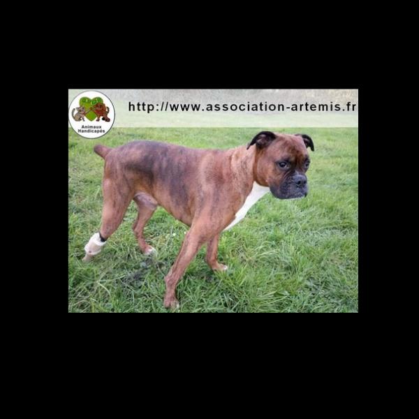 Association Artemis