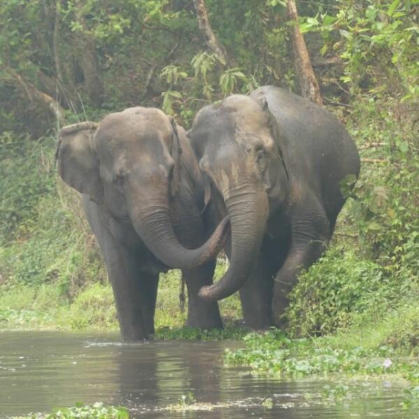 Stand Up 4 Elephants