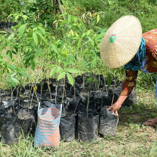 Planète Urgence 1€ = 1 arbre planté